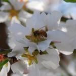 bee i flower
