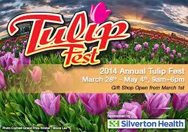 Fesival Tulip