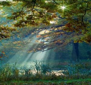 солнце сквозь листви деревьев